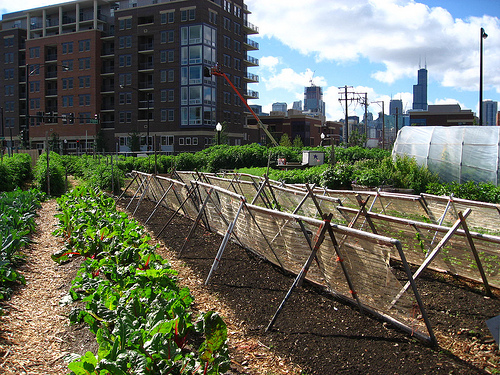 Urban agriculture receives strong support with precedential passing of legislation in San Francisco.  Photo by Linda N.